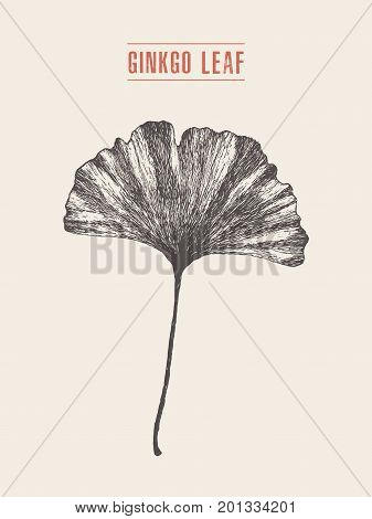 High detailed vector illustration of a ginkgo leaf, hand drawn, sketch
