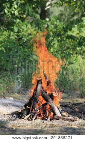 burning woods of camp fire in green forest