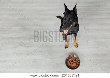 French Shepherd Against Bowl With Dog Food