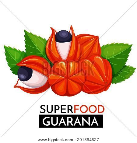 Guarana vector icon. Healthy detox natural product superfood illustration for design market menu superfood .