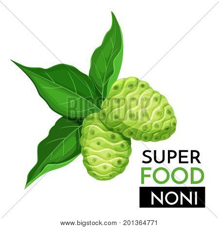 Noni vector icon. Healthy detox natural product superfood illustration for design market menu superfood .