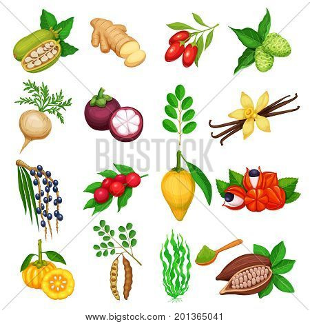 Vector superfood icons set. Healthy detox natural product of camu camu, garcinia cambogia and maca. Carob, ginger, moringa, lucuma, coji berries, mangosteen, acai, guarana and noni. Illustration in cartoon style.