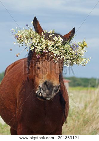 Portrait of a funny horse in a wreath from wild flowers