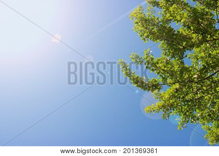 Treetop canopy of a tree against beautiful clear blue sky