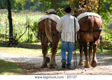 2 Pferde, 1 Mann