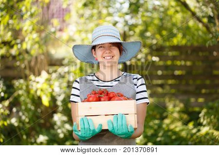 Agronomist in hat with box tomato in vegetable garden on blurred background