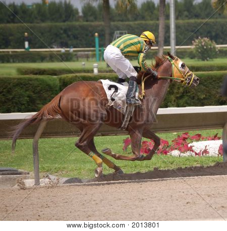 Race Horse In The Lead