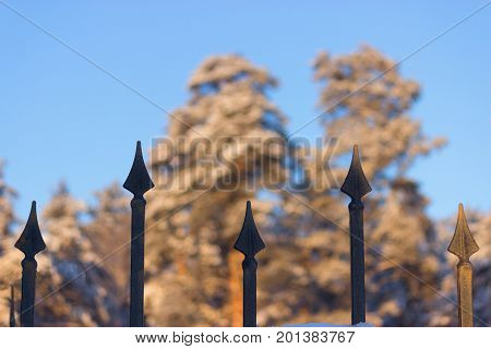 Fence And Forest