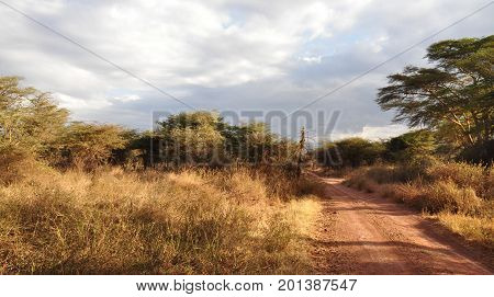 Typical south african landscape with red dirt road