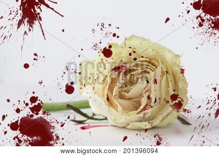 White Rose In Blood
