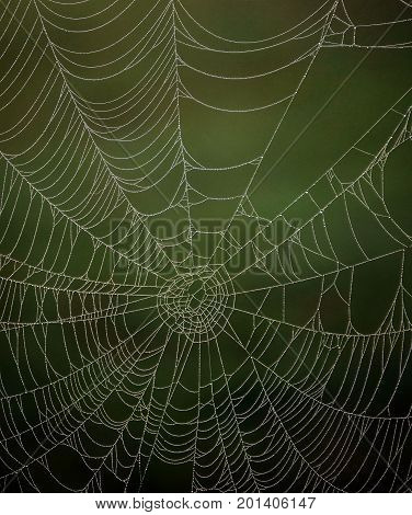 The spider that created this intricate weaving has abandoned the web but dewdrops glisten brightly in the sunlight.