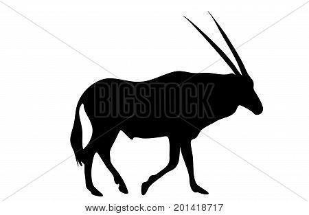 View on the silhouette of a gemsbok - digitally hand drawn vector illustraion