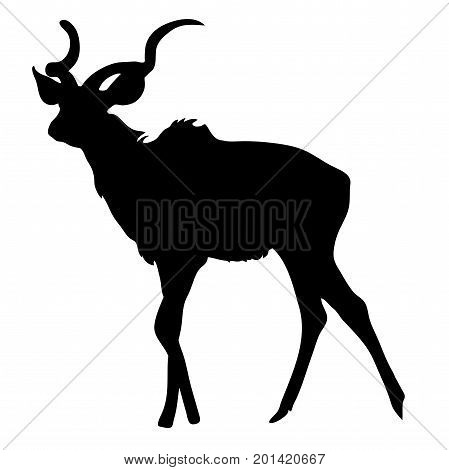View on the silhouette of a greater kudu- digitally hand drawn vector illustraion
