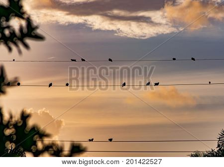 silhouettes of birds on a wire watching the sun rise