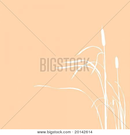 vector silhouette of the reed isolated on brown background