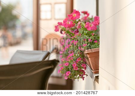 Red Plant On Windowsill Outdoor In Cafe. Traditional European Coffeehouse With Green Plants. Decorat