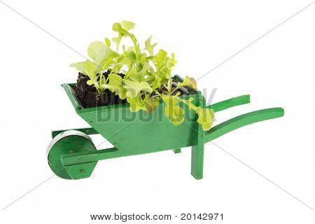 Green wooden wheelbarrow with vegetable plants isolated over white background
