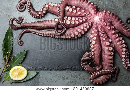 Octopus. Food Background With Seafood Raw Fresh Octopus, Laurel And Lemon. Copy Space, Gray Slate Ba
