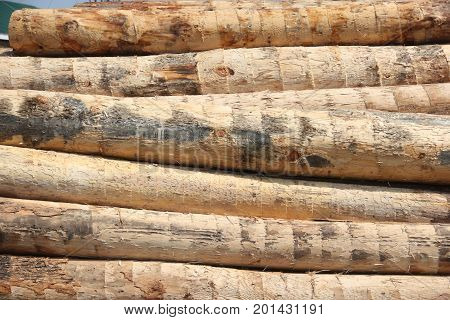 Logs at a sawmill ready to be cut