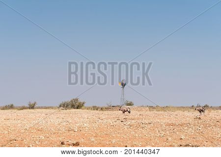 A water-pumping windmill with oryx Oryx gazella in front at the Rateldraf waterhole in North-Western Namibia. A flock of birds is in the air