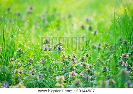 grass and flowers with shallow depth of field