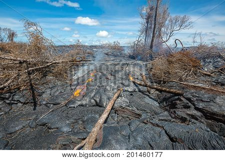 Lava Destroy Forest In Hawaii