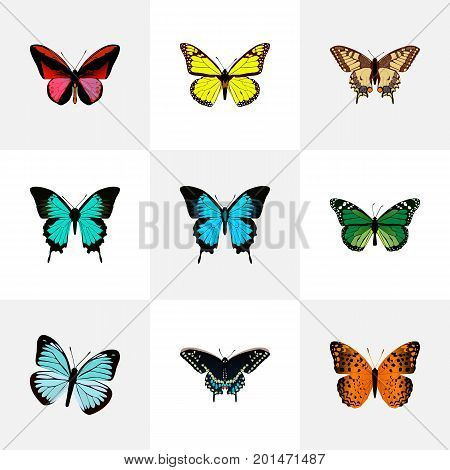 Realistic Copper, Tiger Swallowtail, Archippus And Other Vector Elements