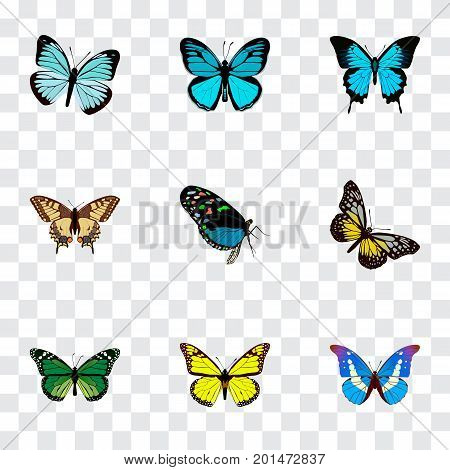 Realistic Archippus, Birdwing, Bluewing And Other Vector Elements