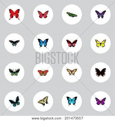 Realistic Spicebush, Green Peacock, Tropical Moth And Other Vector Elements