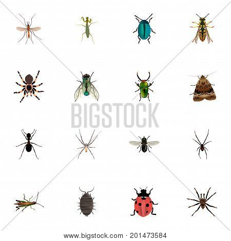 Realistic Tarantula, Ant, Locust And Other Vector Elements
