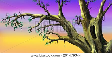African Tree with Big Hollow in a Sunny Summer day. Digital Painting Background Illustration in cartoon style character.