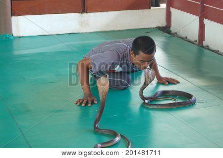 Man kisses a snake snake farm Phuket Thailand august 8 2017