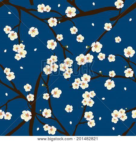 White Plum Blossom Flower on Indigo Blue Background. Vector Illustration.