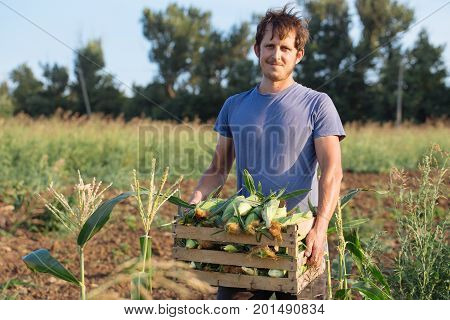 Time to crop corn. Portrait of young farmer holding wooden box with corn while standing in corn field and looking at camera. Corn harvesting rocess at organic eco farm