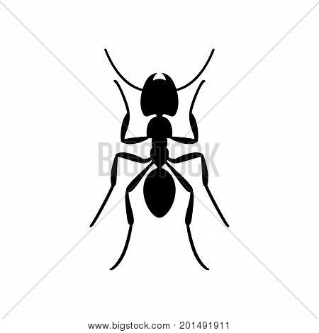 Ant ( formicidae ) black on white