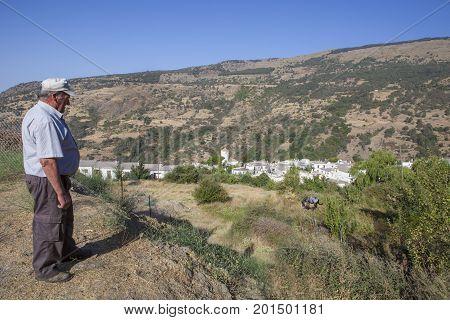 Capileira Granada - August 20th 2017: Elder farmer observing his mule grazing close Capileira Village Alpujarras Region Spain