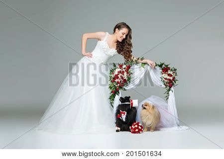 Beautiful bride young woman in white gown standing with spitz wedding couple under flower arch over grey background. dog bride in skirt and veil. groom in suit and silk hat. happy newlyweds. copy space.