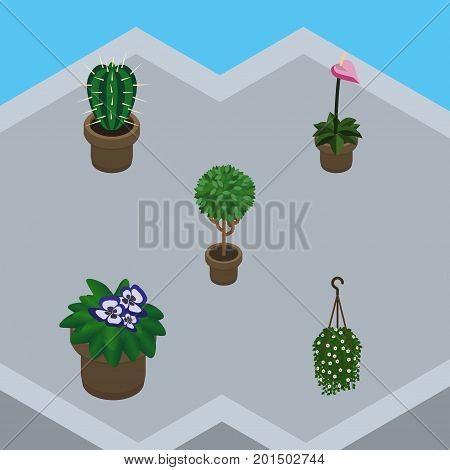 Isometric Flower Set Of Grower, Flowerpot, Blossom And Other Vector Objects