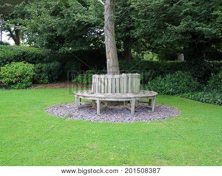 Wooden circular bench around tree in garden on banks of River Thames in Caversham Berkshire England