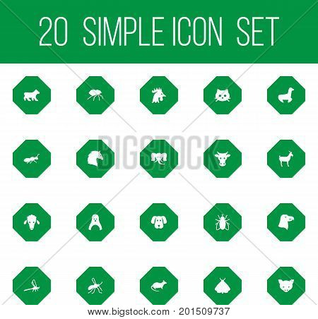 Collection Of Butterfly, Kine, Damselfly And Other Elements.  Set Of 20 Zoology Icons Set.