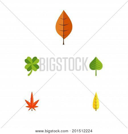 Flat Icon Leaves Set Of Hickory, Leafage, Maple And Other Vector Objects