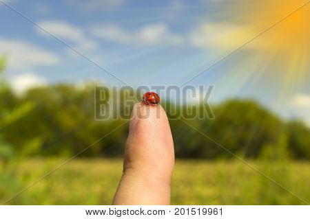 Ladybird on the tip of a finger on a forest background