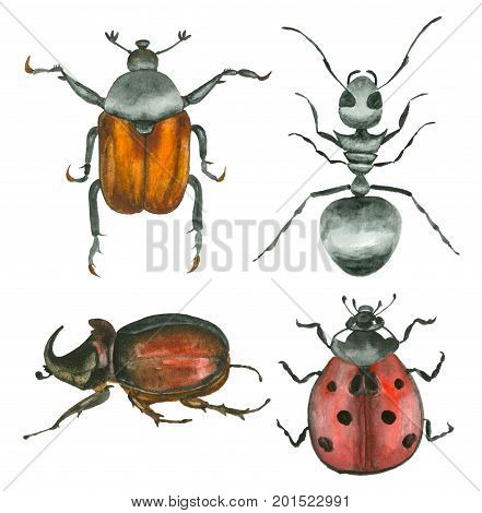 Set of watercolor hand drawn insects rhinoceros, ladybug and ant beetle isolated on white. Watercolor painting, animal illustration.