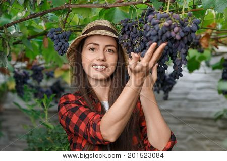portrait of happy young woman gardener holding branches of ripe blue grape. Girl farmer. Harvesting of grape. Gardening, agriculture, viticulture, harvest concept