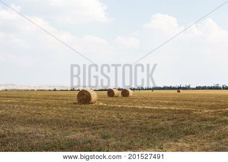 Field With Hay Bales. Bales Straw Left After Wheat Harvesting, Shallow Depth Of Field. Agricultural