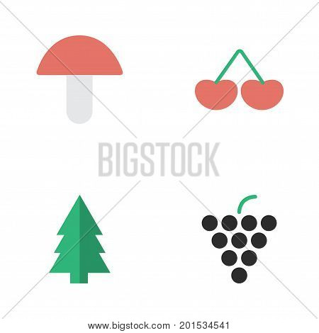 Elements Wine, Berry, Fungus And Other Synonyms Wineglass, Grape And Fungus.  Vector Illustration Set Of Simple Garden Icons.