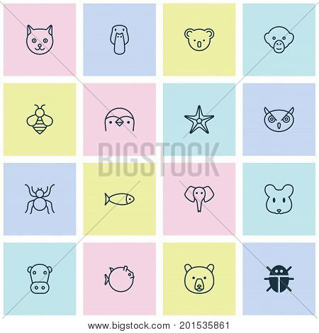 Nature Icons Set. Collection Of Grizzly, Kitten, Marsupial And Other Elements
