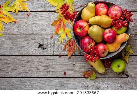 Autumn harvest and thanksgiving card background. Various fruits, rowan, apples, pears in old metal basin and fall leaves on weathered rustic wood with copy space, top view