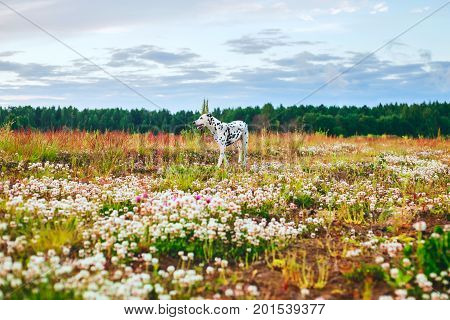 Adorable dalmatian dog is walking in a meadow, looking away, yellow and red grass and flowers background