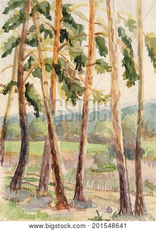 Rural watercolor landscape with pines, summer day
